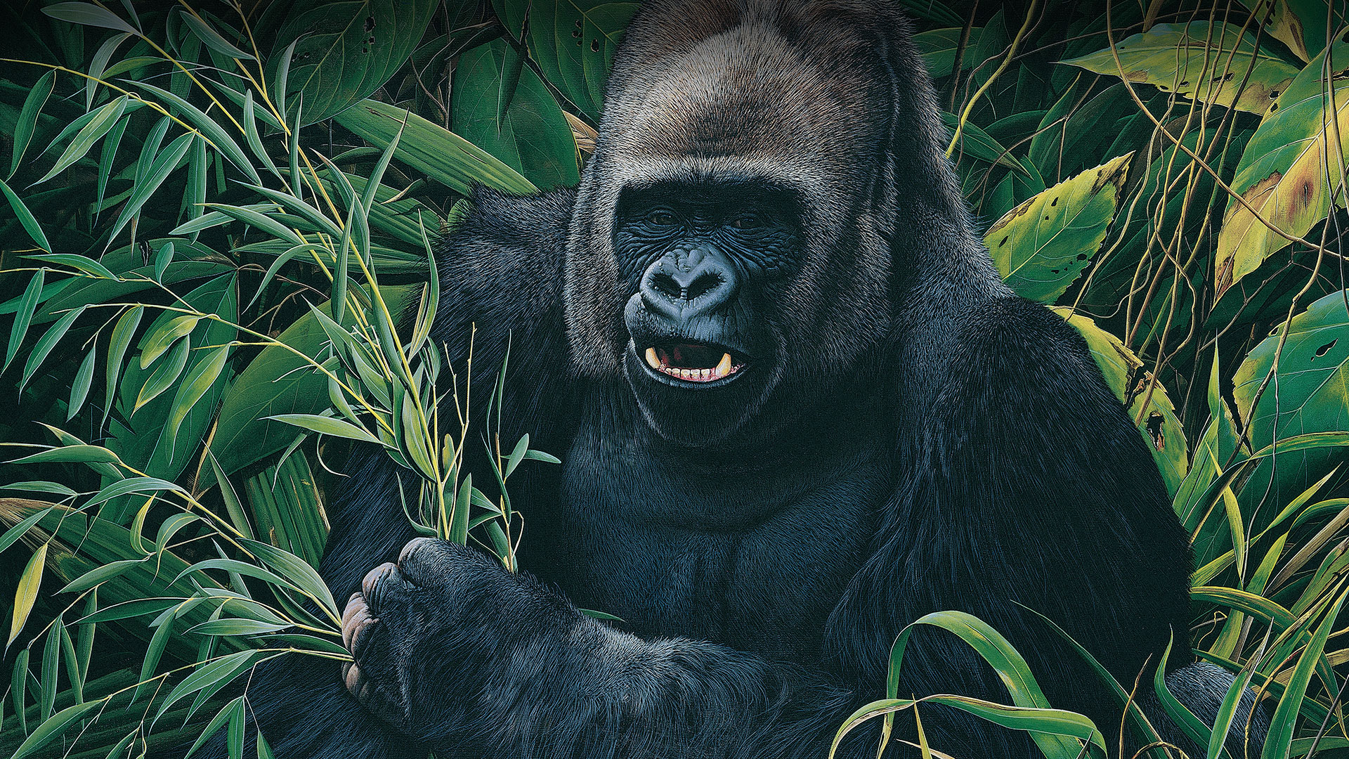 """Gorila"" 70x90"
